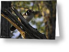 Wood Duck Morning Greeting Card