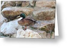 Wood Duck On Fountain Greeting Card