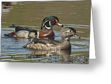 Wood Duck Pair Dwf088 Greeting Card