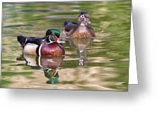 Wood Duck Pair Greeting Card