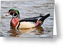 Wood Duck Profile Greeting Card
