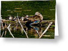 Wood Duck Rest Time Greeting Card