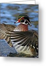 Wood Duck Standing Ovation Greeting Card