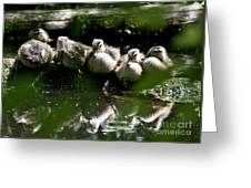 Wood Ducklings On A Log Greeting Card