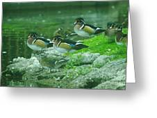 Wood Ducks Hanging Out Greeting Card