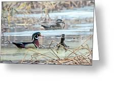 Wood Ducks In The Mist Greeting Card