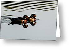 Wood Ducks Reflection Greeting Card