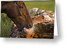 Wood Eater Greeting Card
