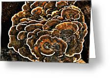 Wood Fungus Greeting Card