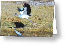 Wood Stork And Blue Heron Greeting Card