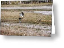 Wood Stork And Herons Greeting Card
