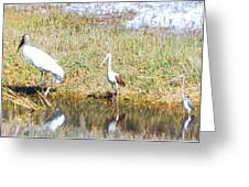 Wood Stork And Ibis And Heron Greeting Card