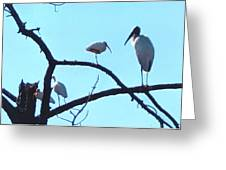 Wood Stork And Ibis Greeting Card