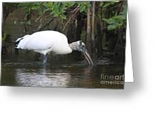 Wood Stork In The Swamp Greeting Card