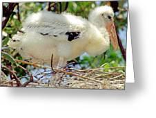 Wood Stork Mycteria Americana Greeting Card