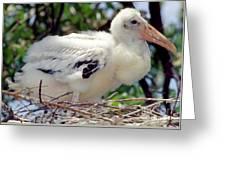 Wood Stork Nestling Greeting Card