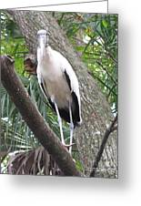 Wood Stork On A Limp Greeting Card