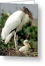 Wood Stork With Nestling Greeting Card