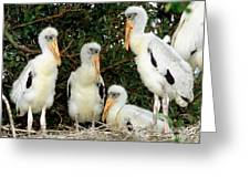 Wood Stork Young In Nest Greeting Card
