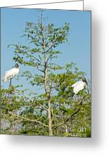 Wood Storks In The Everglades Greeting Card