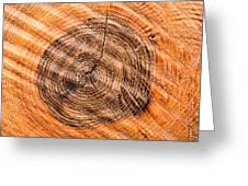 Wood Surface With Annual Rings Greeting Card