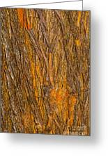 Wood Texture 3 Greeting Card