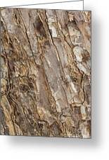 Wood Textures 4 Greeting Card