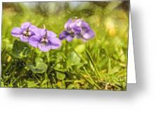 Wood Violet Greeting Card