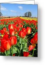 Woodburn Tulip Fields Greeting Card