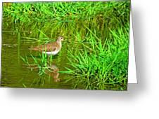 Solitary Sandpiper Greeting Card