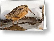 Woodcock In Winter Greeting Card
