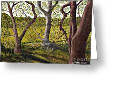 Wooded Glade Greeting Card