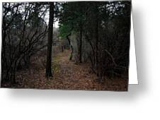 Wooded Way Greeting Card