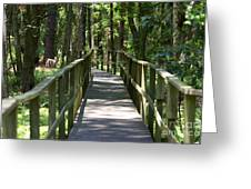 Wooden Boardwalk Through The Forest Greeting Card