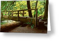 Wooden Bridge In The Hoh Rainforest Greeting Card