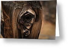 Wooden Eye Greeting Card