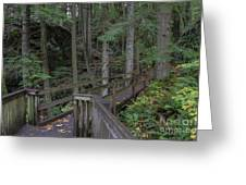 Wooden Forest Trail  Greeting Card