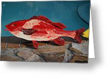 Wooden Red Snapper Greeting Card by Val Oconnor