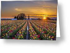 Wooden Shoe Tulip Festival Sunset Greeting Card