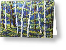 Woodland Birches Greeting Card
