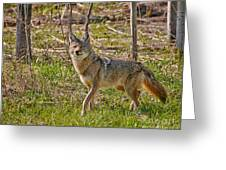 Woodland Coyote Greeting Card