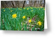 Woodland Daffodils Greeting Card