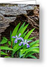 Woodland Dwarf Iris Wildflowers Greeting Card