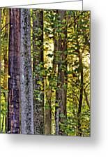 Woodland Morning Greeting Card