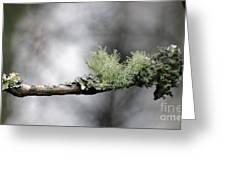 Woodland Moss Greeting Card