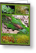 Woodland Mosses Greeting Card