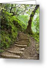 Woodland Stairs Greeting Card