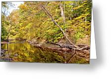 Woodland Stream Early Autumn Montgomery County Pennsylvania Greeting Card