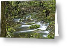 Woodland Stream - Monk's Dale Greeting Card