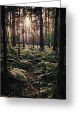 Woodland Trees Greeting Card